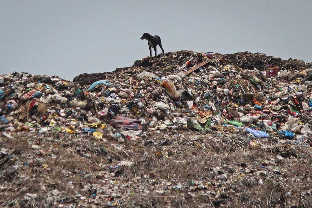 Basura A dog stands on a heap of garbage at a dumping ground on the