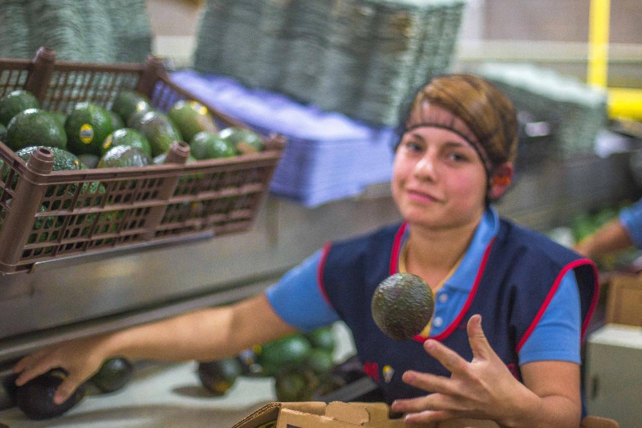 México desarrolla plan de diversificación de mercados agroalimentarios: Sader