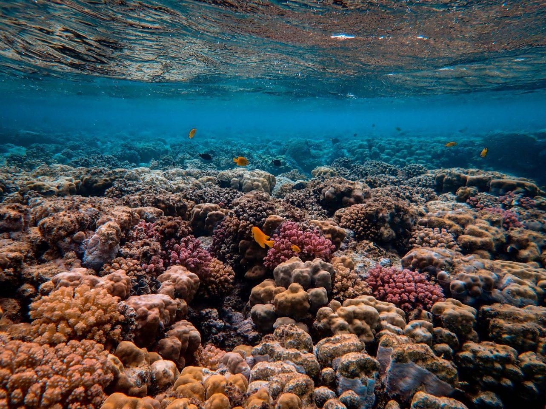 Cuba emprende proyecto para rescatar arrecifes del Caribe