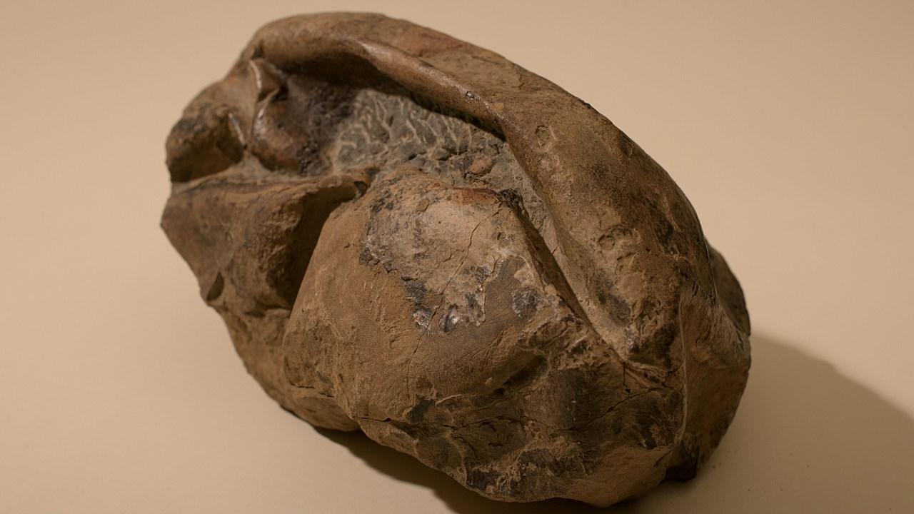 Descubren en Antártida fósil del huevo más grande de era de los dinosaurios