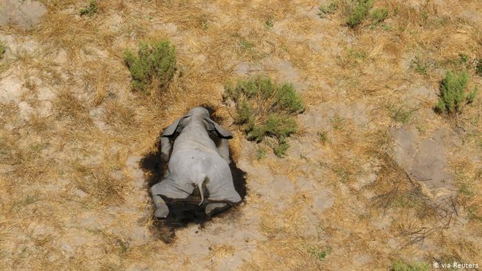 Gran preocupación por misteriosa muerte de cientos de elefantes en Botsuana