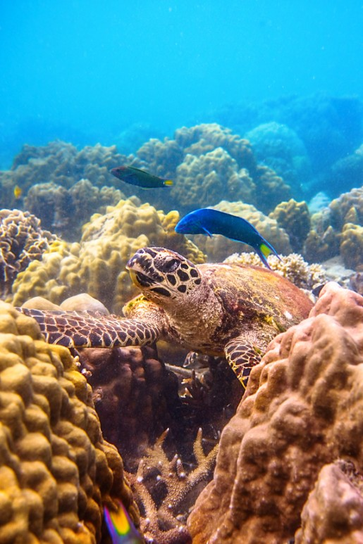 arrecifes de colara DoDo