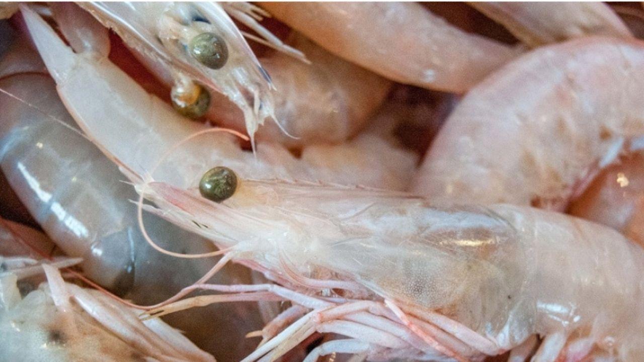 China detecta camarones positivos con Covid-19; suspende importaciones