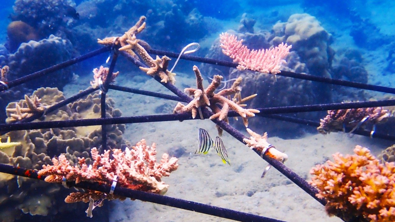 Conoce la joya ecológica que inspira a salvar los arrecifes de coral