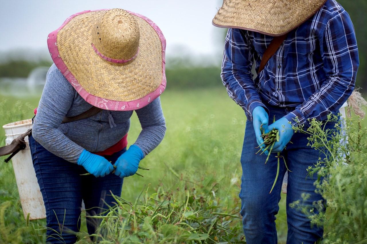 Florida alerta de misteriosas semillas llegadas de China y pide no sembrarlas