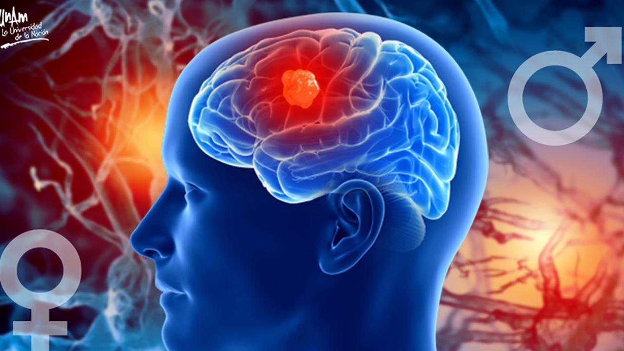 Hormonas sexuales pueden estimular el crecimiento de tumores: UNAM