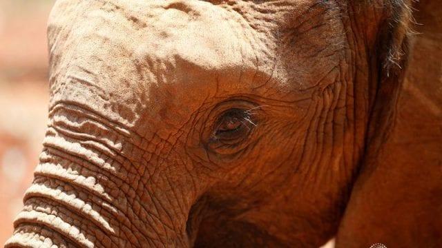 Muerte elefantes sin resolver