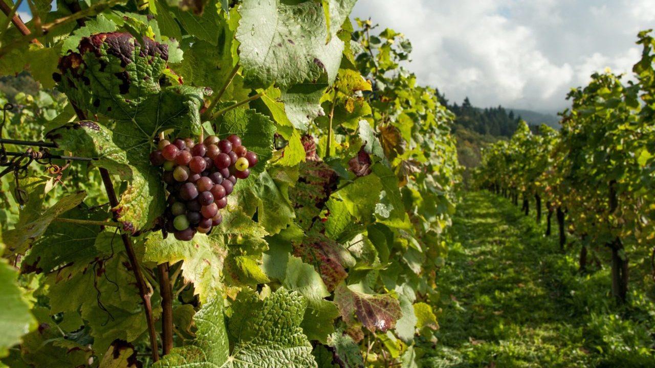 Ruta del Queso y el Vino en Querétaro, una tendencia de viaje