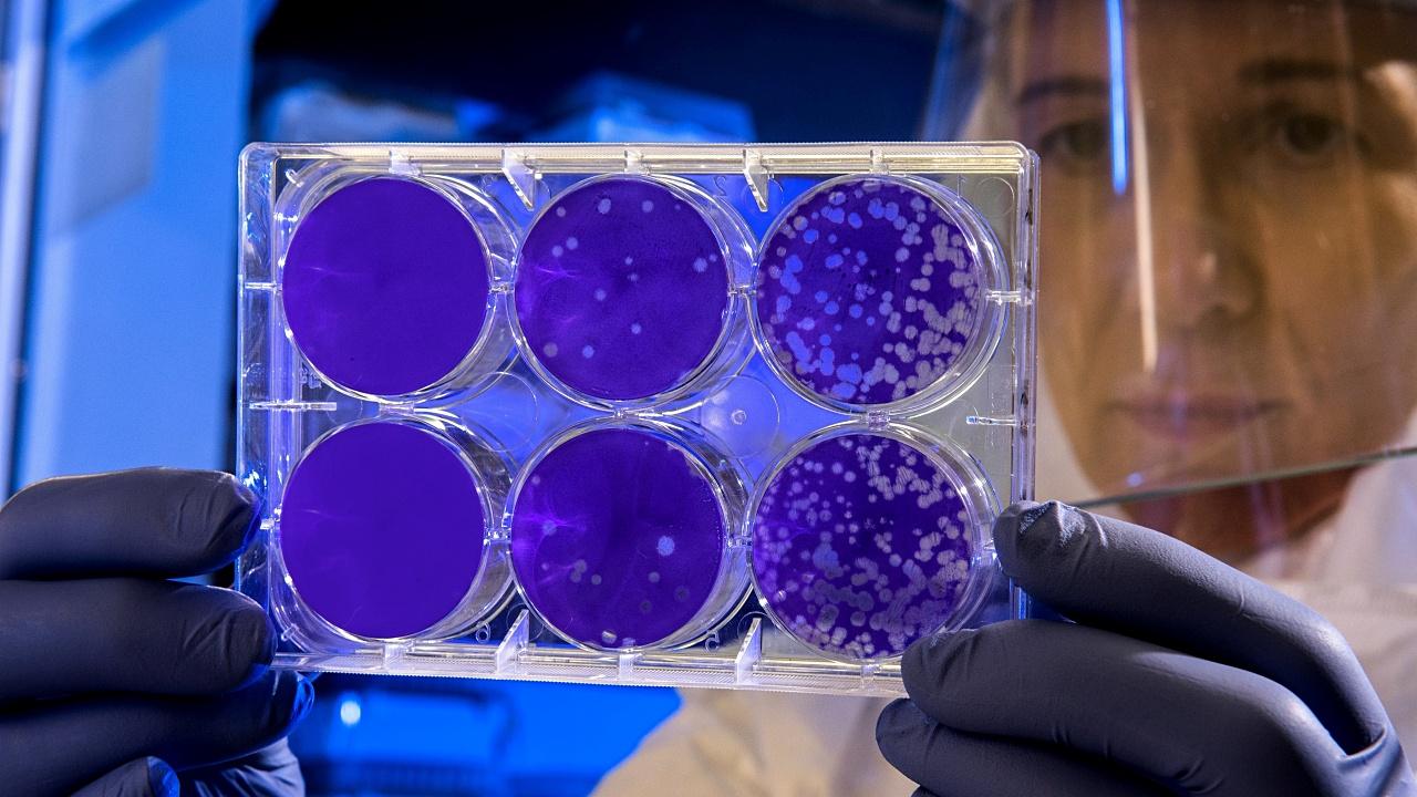 La otra cara de los virus: no sólo afectan la salud, también la protegen