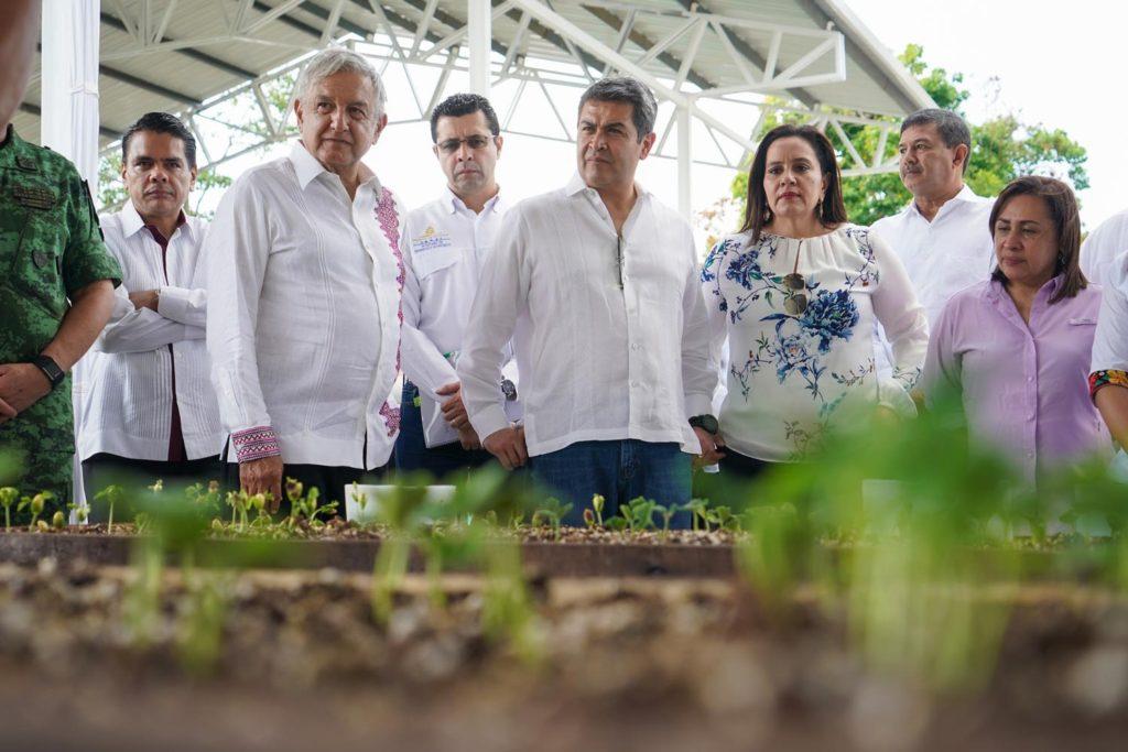 PAN denuncia a delegado de Veracruz por desvíos en Sembrando Vida