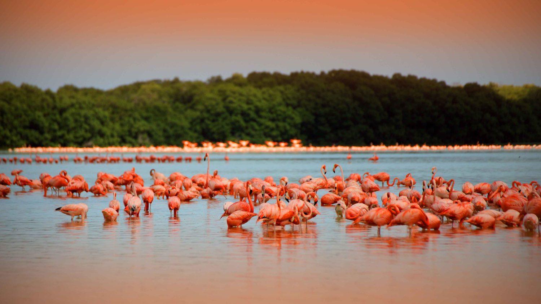 Tres tesoros de Yucatán para enamorarte a primera vista
