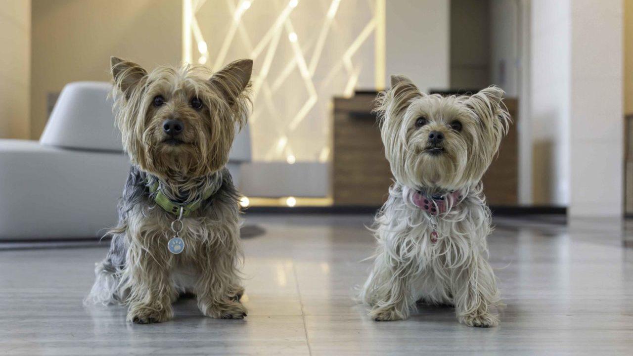 BBVA lanza seguro para mascotas; cubre a perros y gatos de hasta 12 años