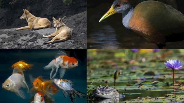 biodiversidad_latino_américa_declive_perdida
