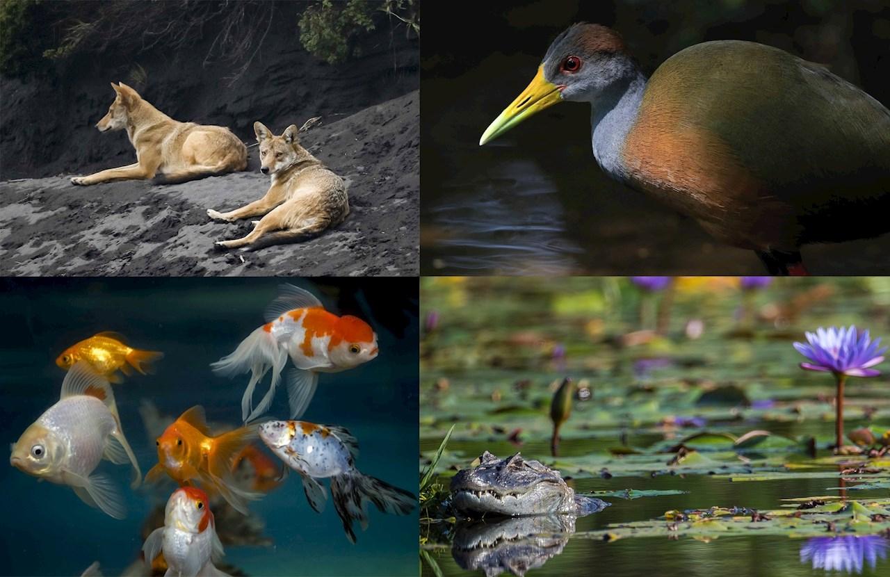 WWF advierte sobre alarmante declive en biodiversidad de Latam