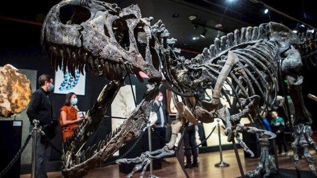 Dinosaurio_esqueleto_compra_venta_