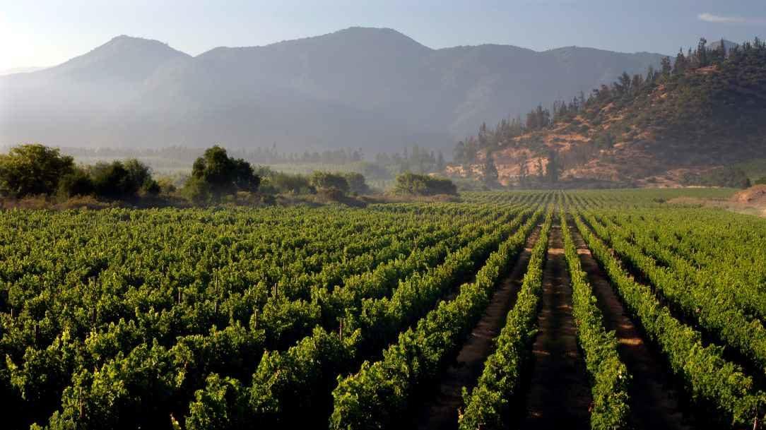Viaja al Valle del Maipo a través de los vinos Tarapacá Gran Reserva