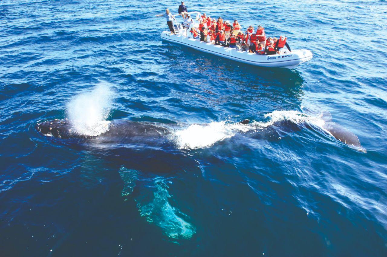 Avistamiento de cetáceos, una de las formas de turismo con mayor crecimiento
