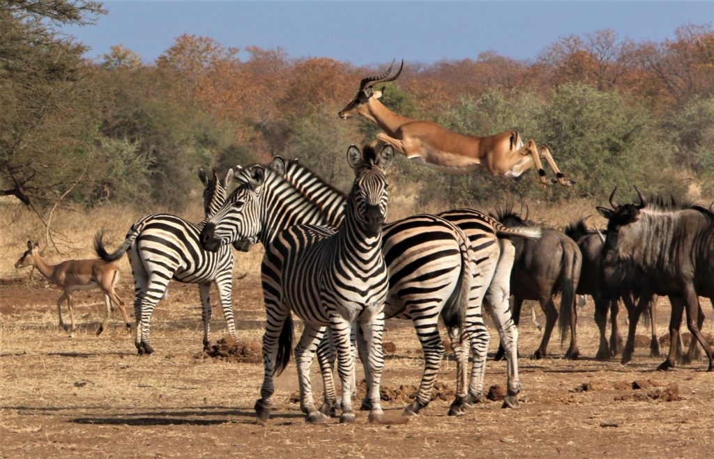 safari África