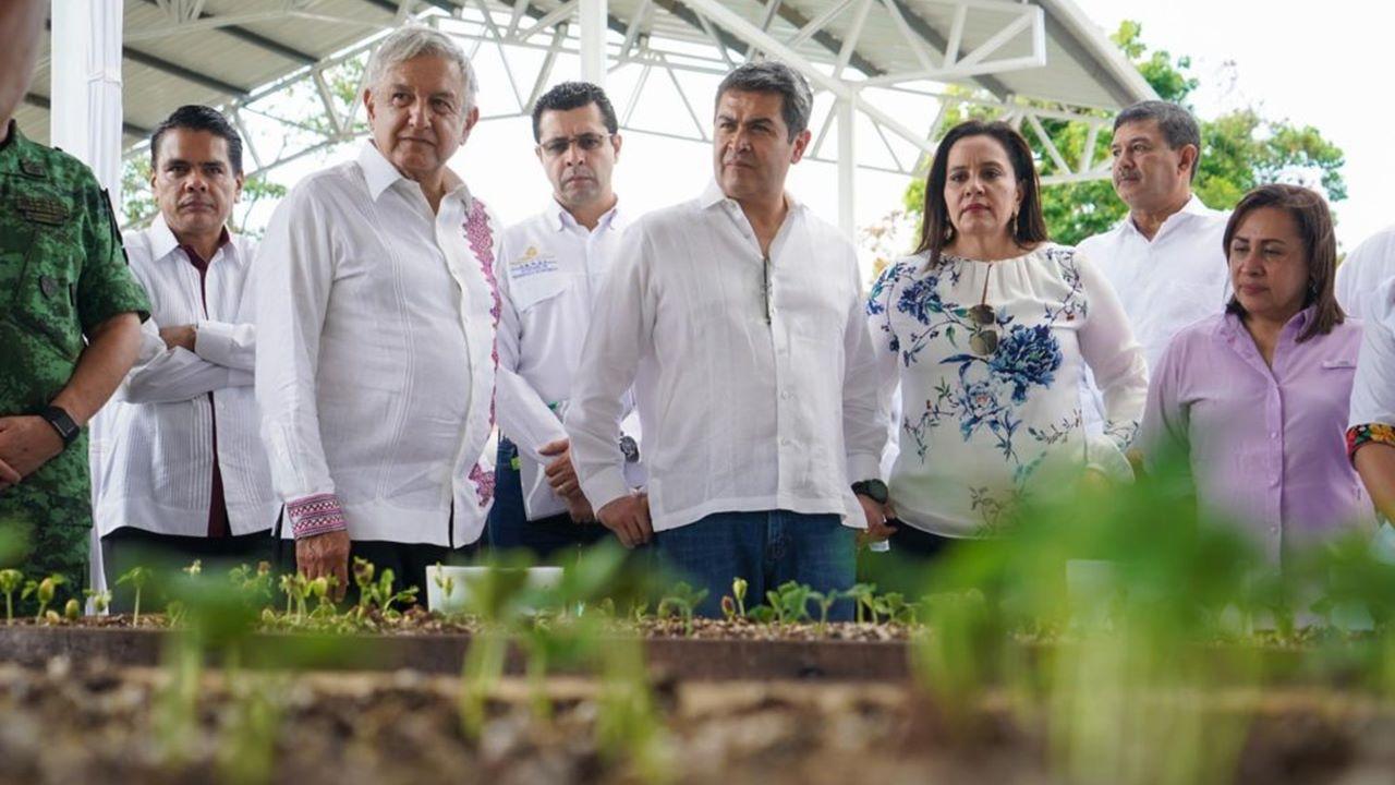 AMLO beca a 11,184 jóvenes y sembradores en Honduras y El Salvador