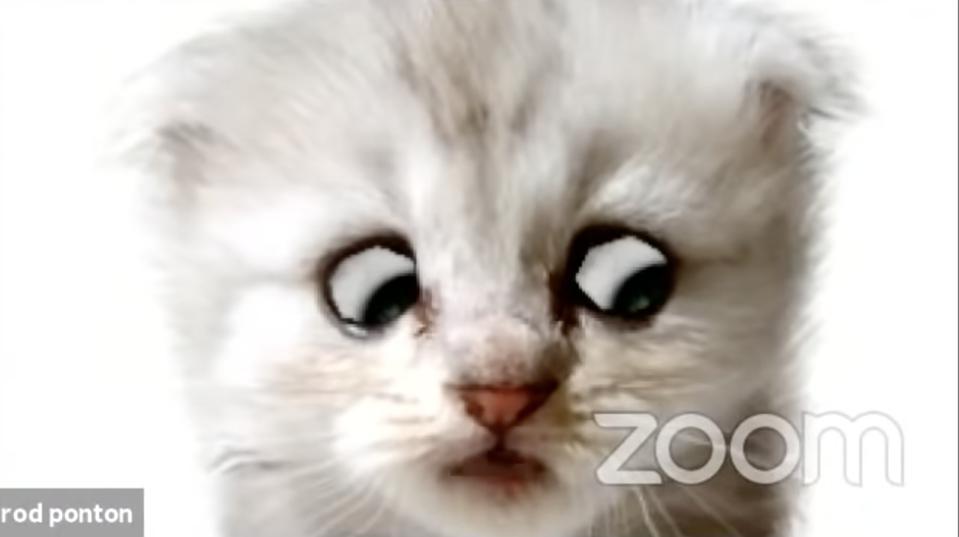 El software detrás del video viral 'Cat Lawyer' ha atormentado a los usuarios durante años