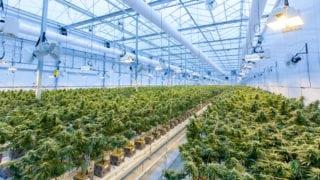 Monreal pide no precipitarse y evitar una mala ley sobre la marihuana