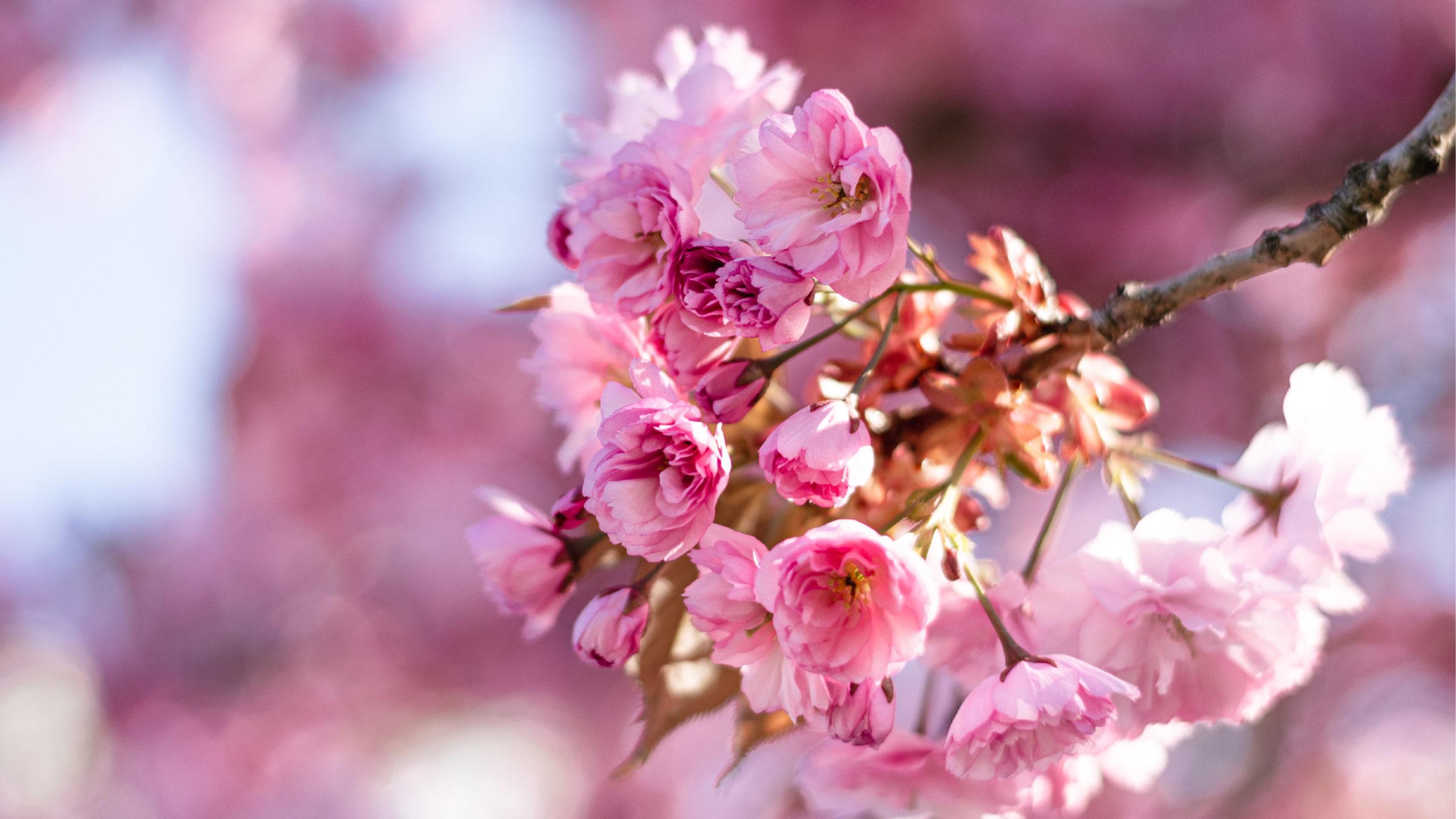 Altas concentraciones de polen influyen en más infecciones por Covid-19