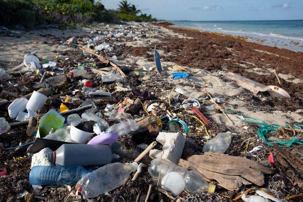 Sargazo Mexico Basura Contaminación: Plastic debris and Sargassum seaweed washing up on Caribbean beaches