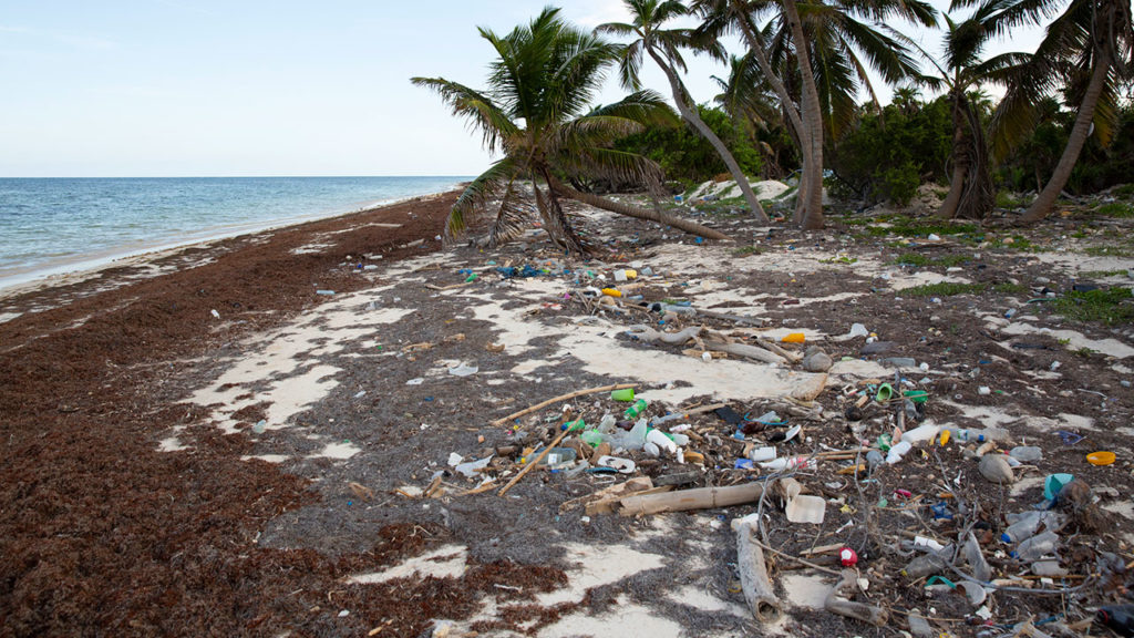 Sargazo Mexico Contaminación : Plastic debris and Sargassum seaweed washing up on Caribbean beaches