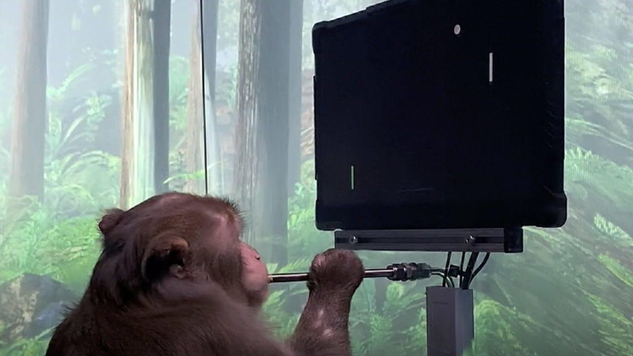 Neuralink de Musk muestra a un mono con chip en cerebro jugando videojuegos con el pensamiento