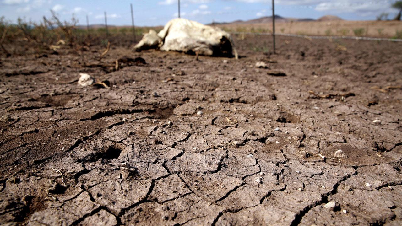 Sequía en México se debe al fenómeno de la Celda de Hadley: SMN