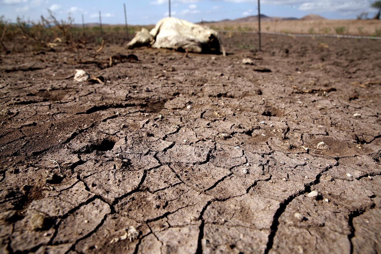 Fotos | La sequía golpea al agro mexicano y anticipa una menor producción