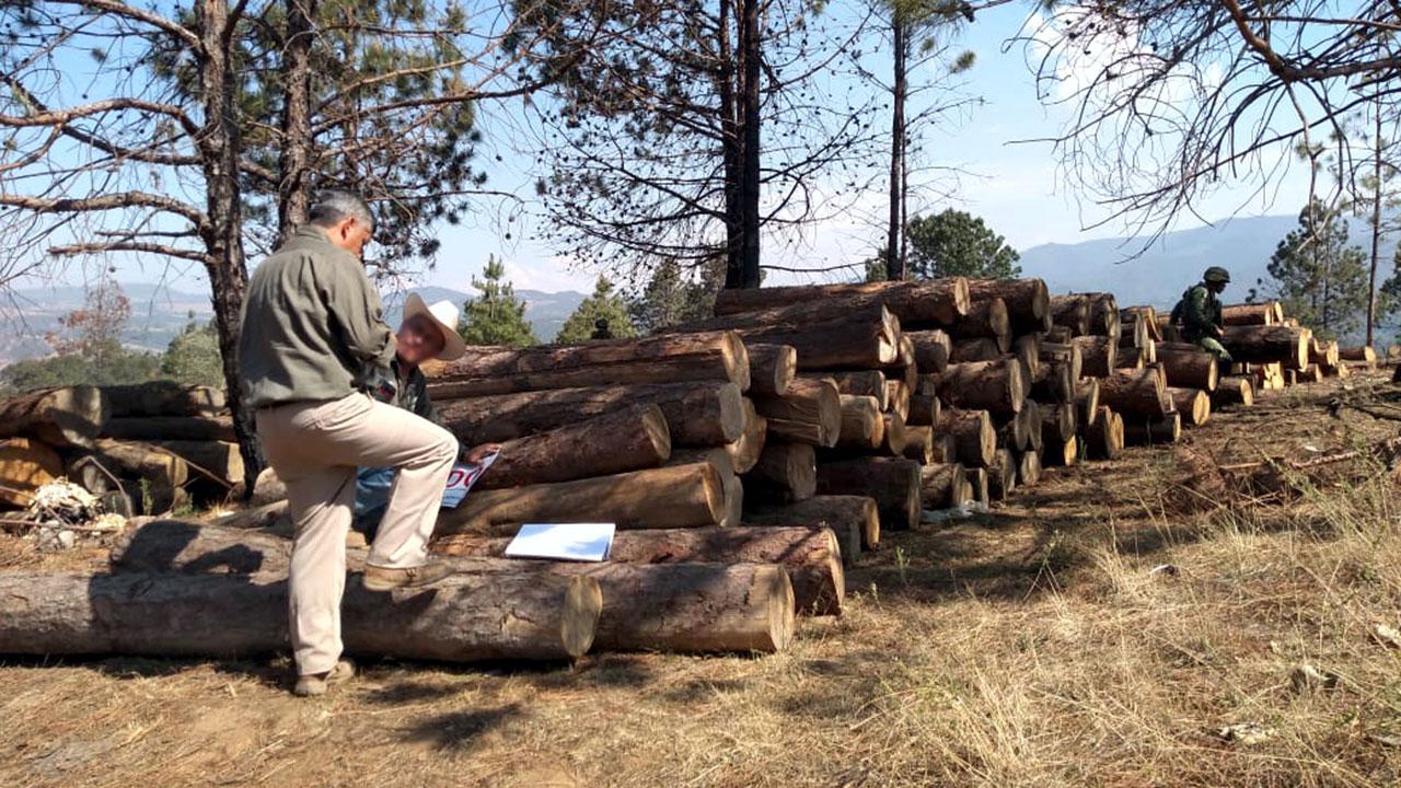 Amazon y Nestlé se suman al proyecto LEAF para evitar deforestación