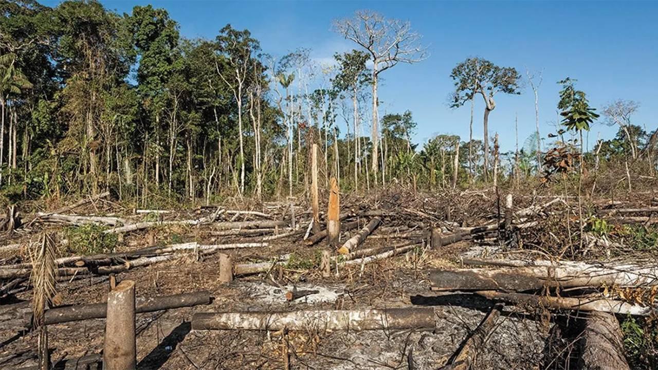 Se deforestaron más de 580 km de la Amazonía en abril; nuevo récord