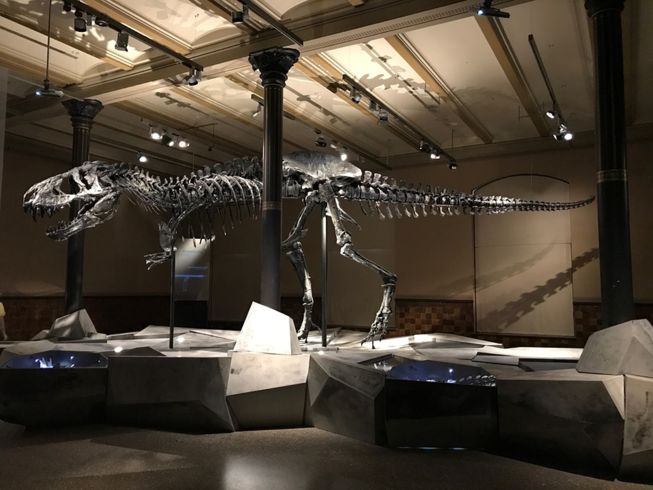 Estudio muestra que hubo 2,500 millones de T. rex