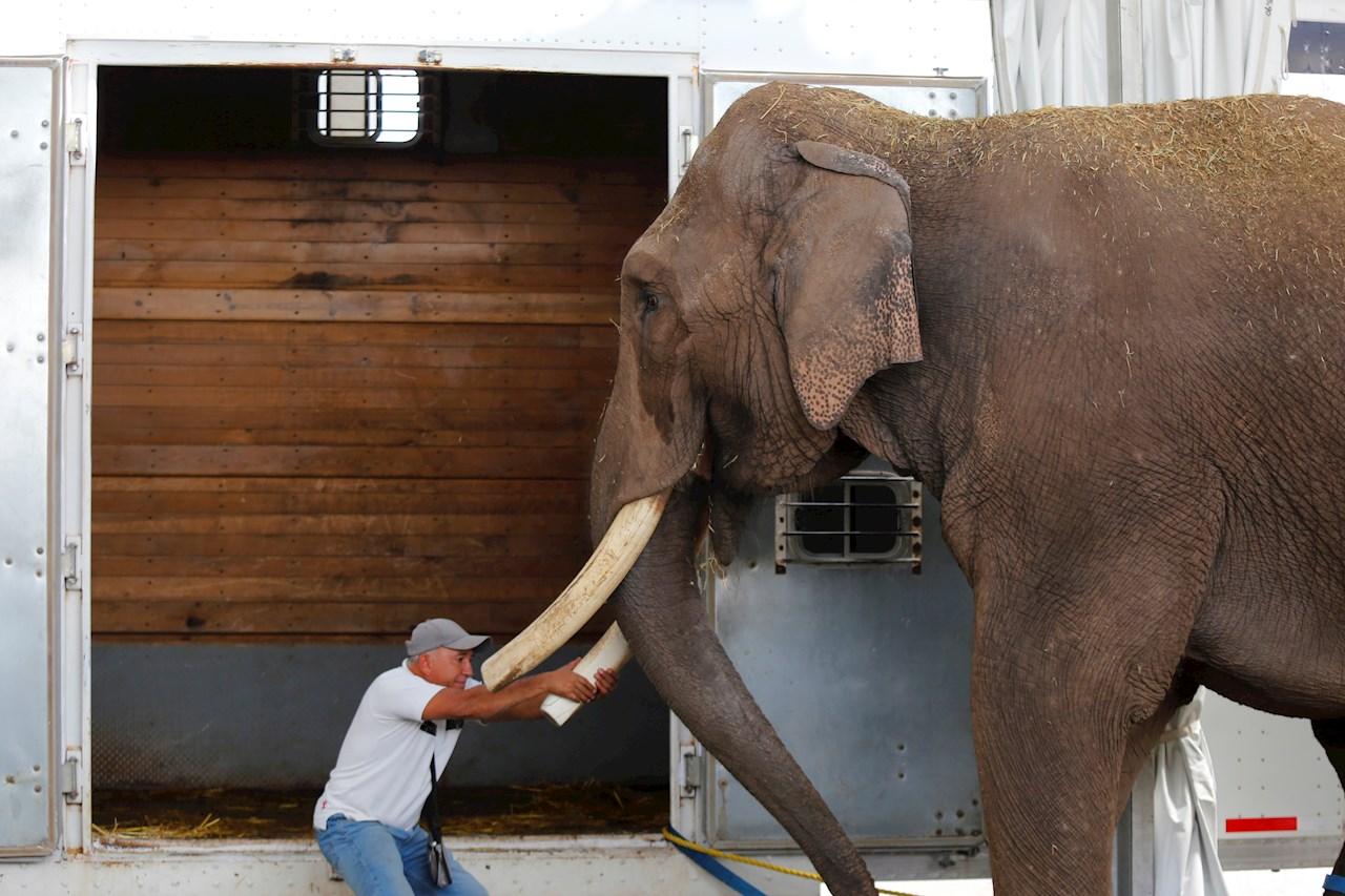 Rescatan elefante que fue abandonado por un circo en Guadalajara