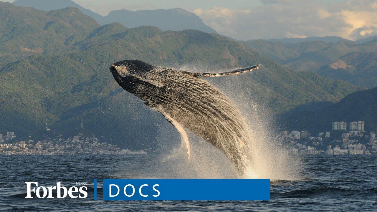 ¿Por qué salvar a las ballenas?