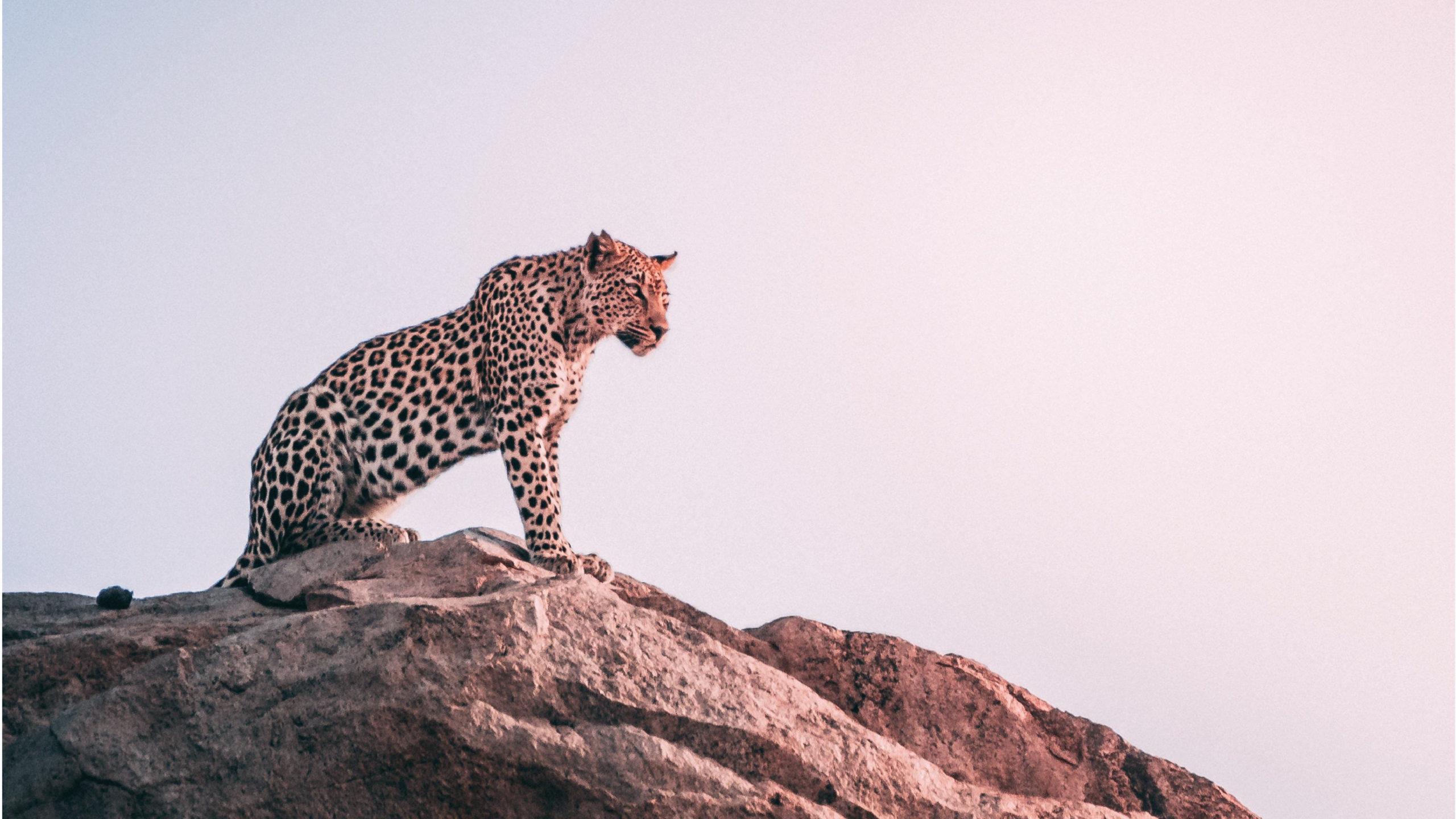 Kenia realizará su primer censo de animales salvajes