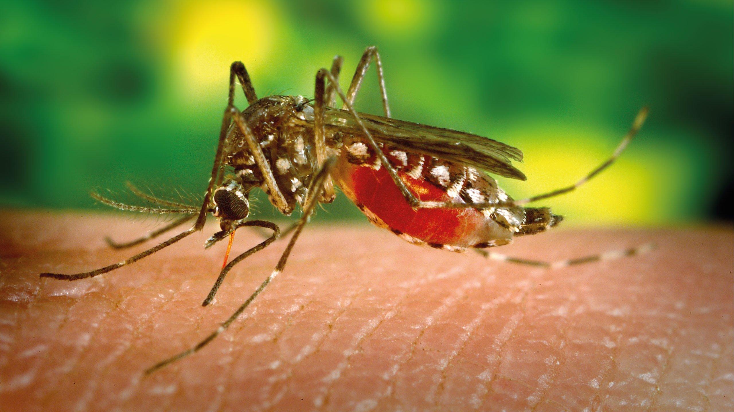 Casos de dengue en América Latina disminuyeron 50% en 2020: OMS