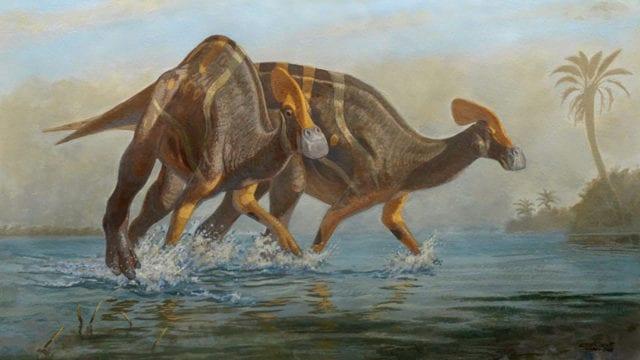 Paleontólogos identifican una nueva especie de dinosaurio en Coahuila