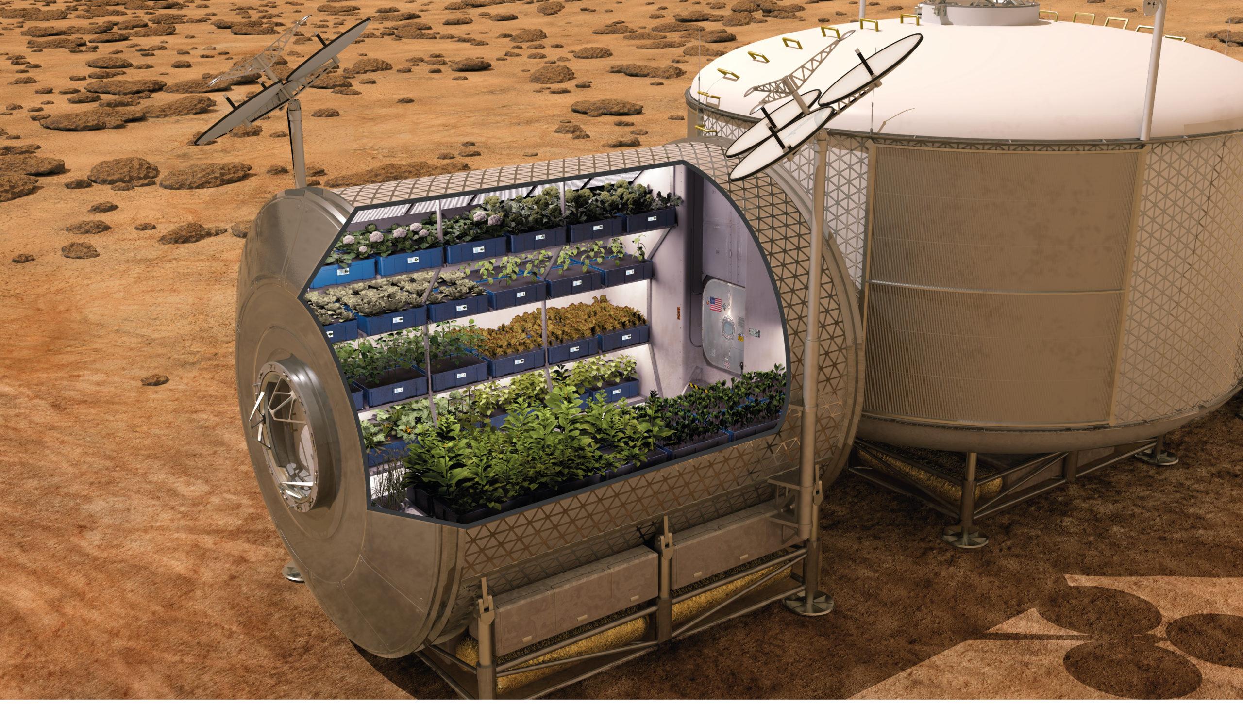 Concurso busca recetas con papas que se cultivarían en Marte