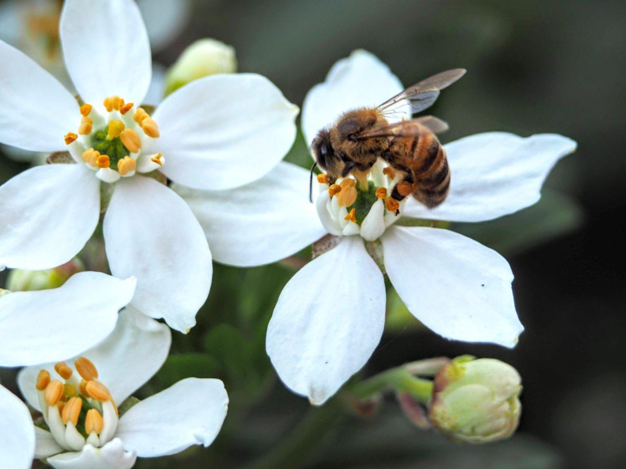 Datos curiosos acerca de las abejas y por qué es tan importante cuidarlas