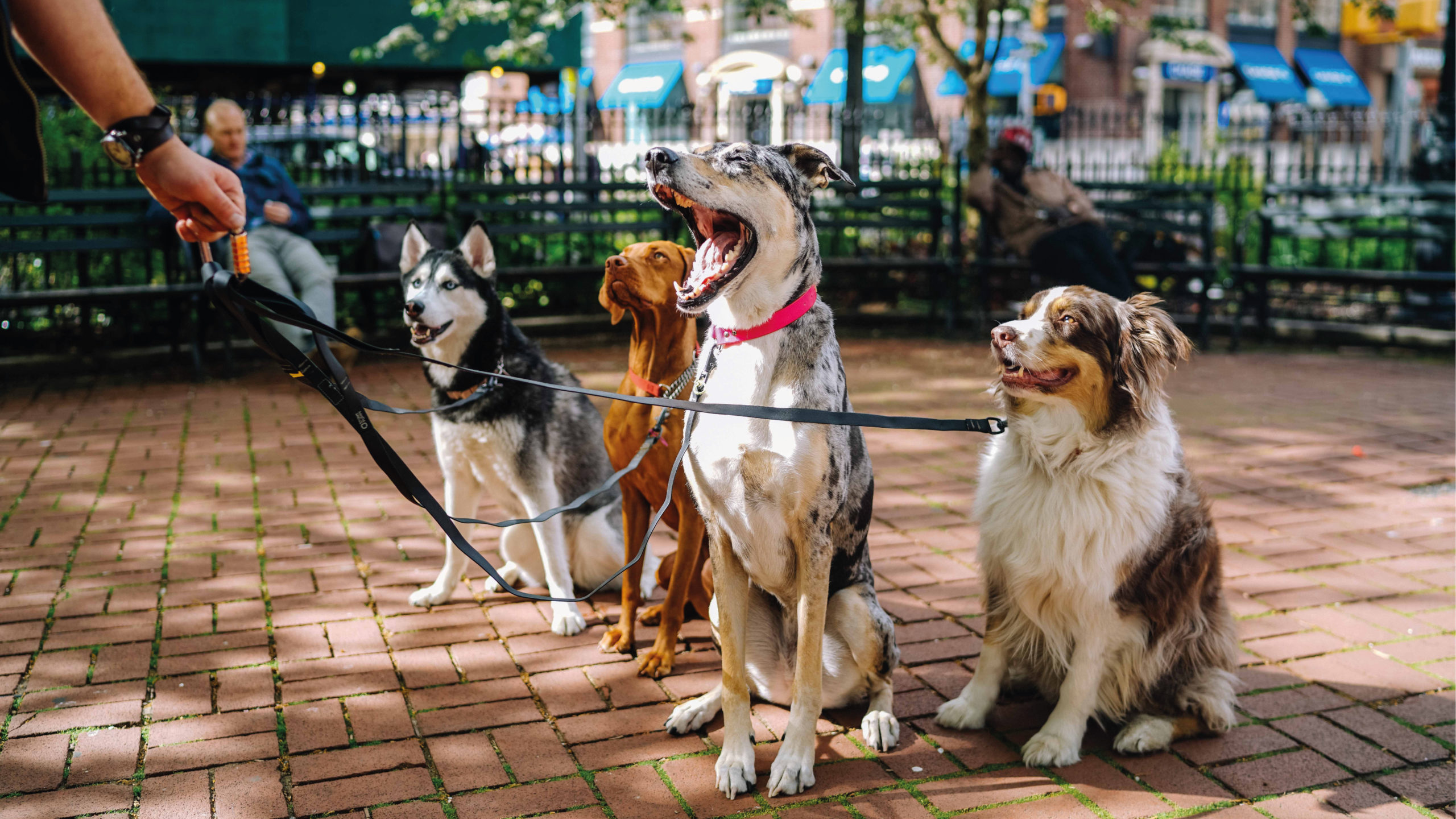 Corea del Sur sugiere prohibir consumo de carne de perro