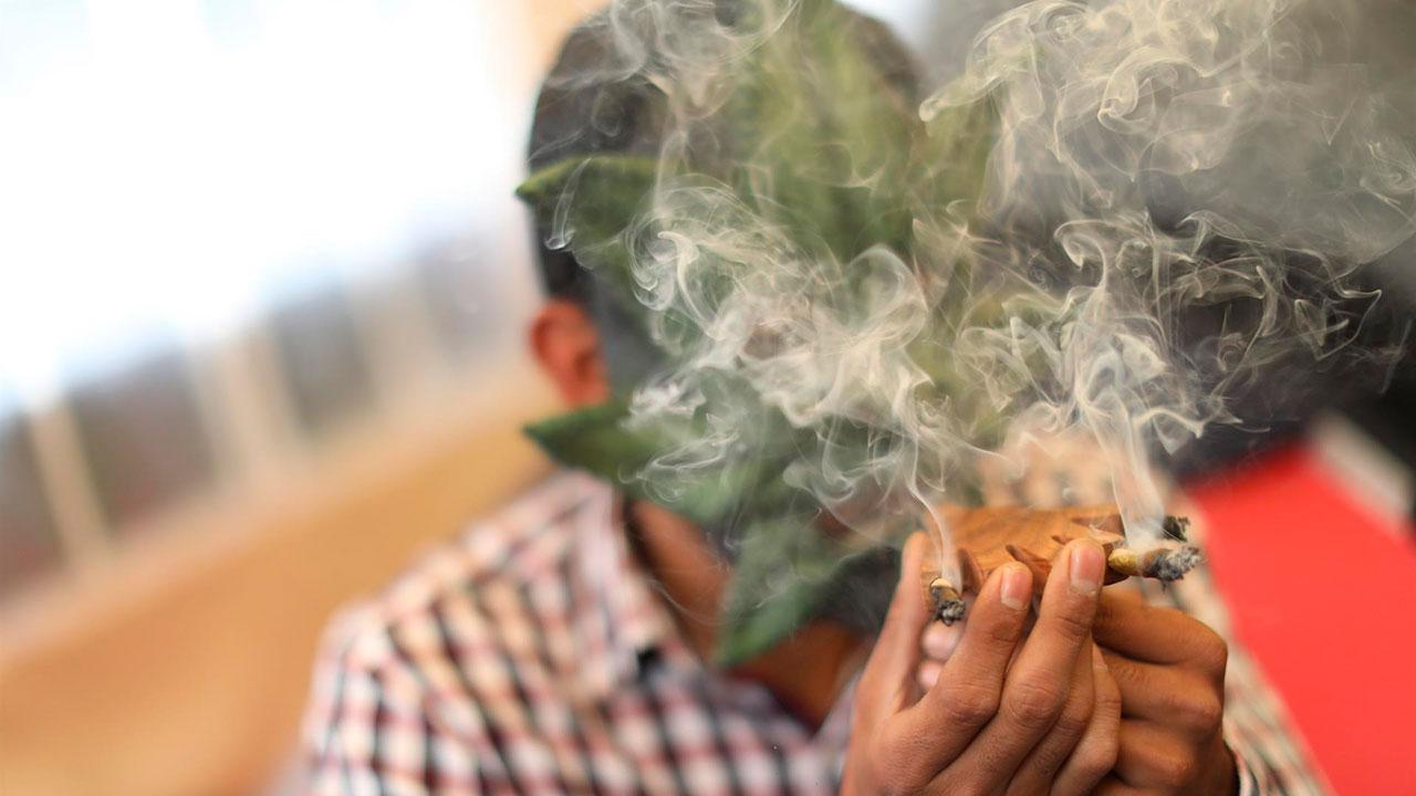Retos para el futuro del cannabis