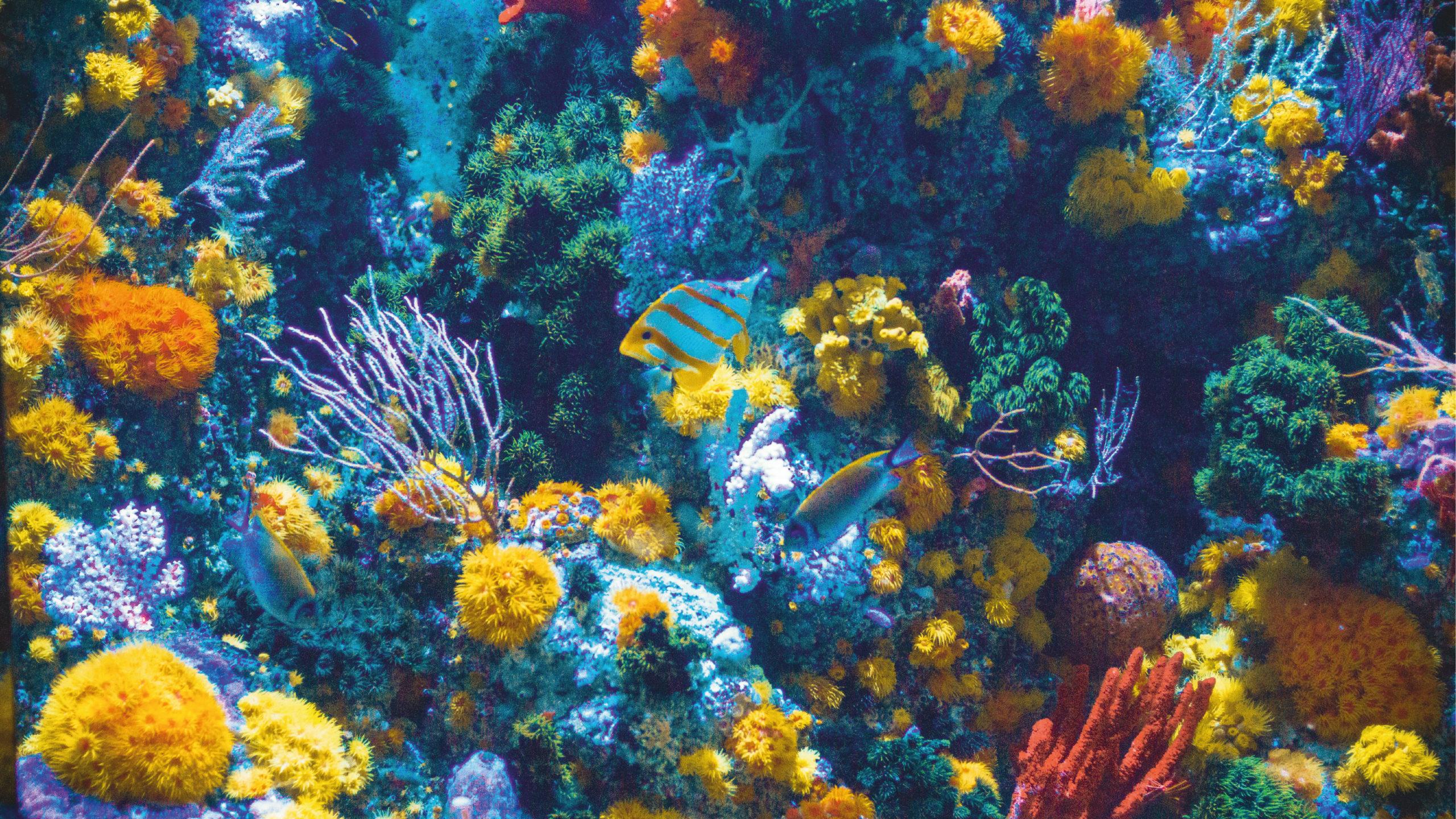 Piden a ONU más protección a la biodiversidad en aguas internacionales