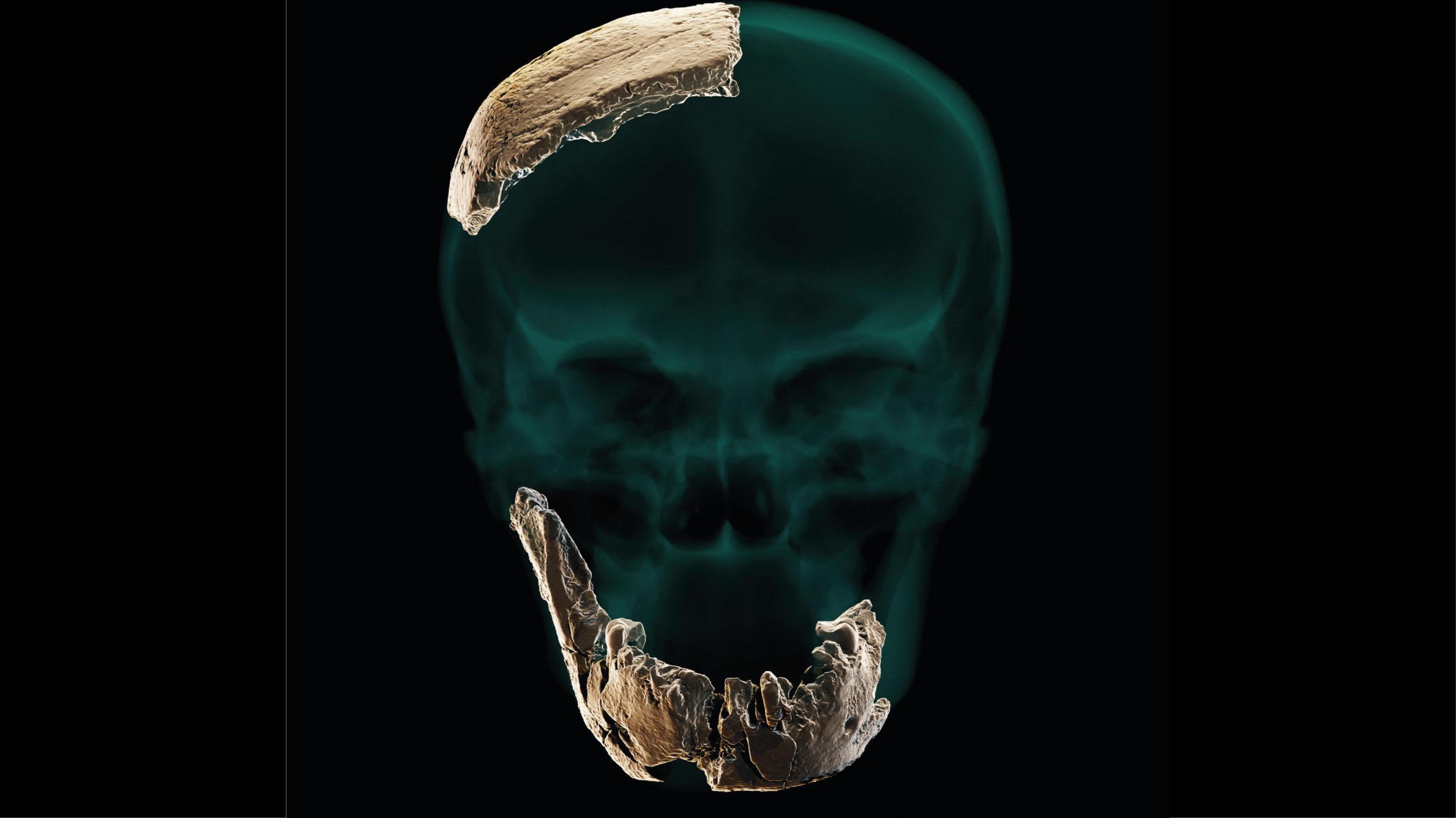 Descubren nuevo antecesor del humano: Homo Nesher Ramla