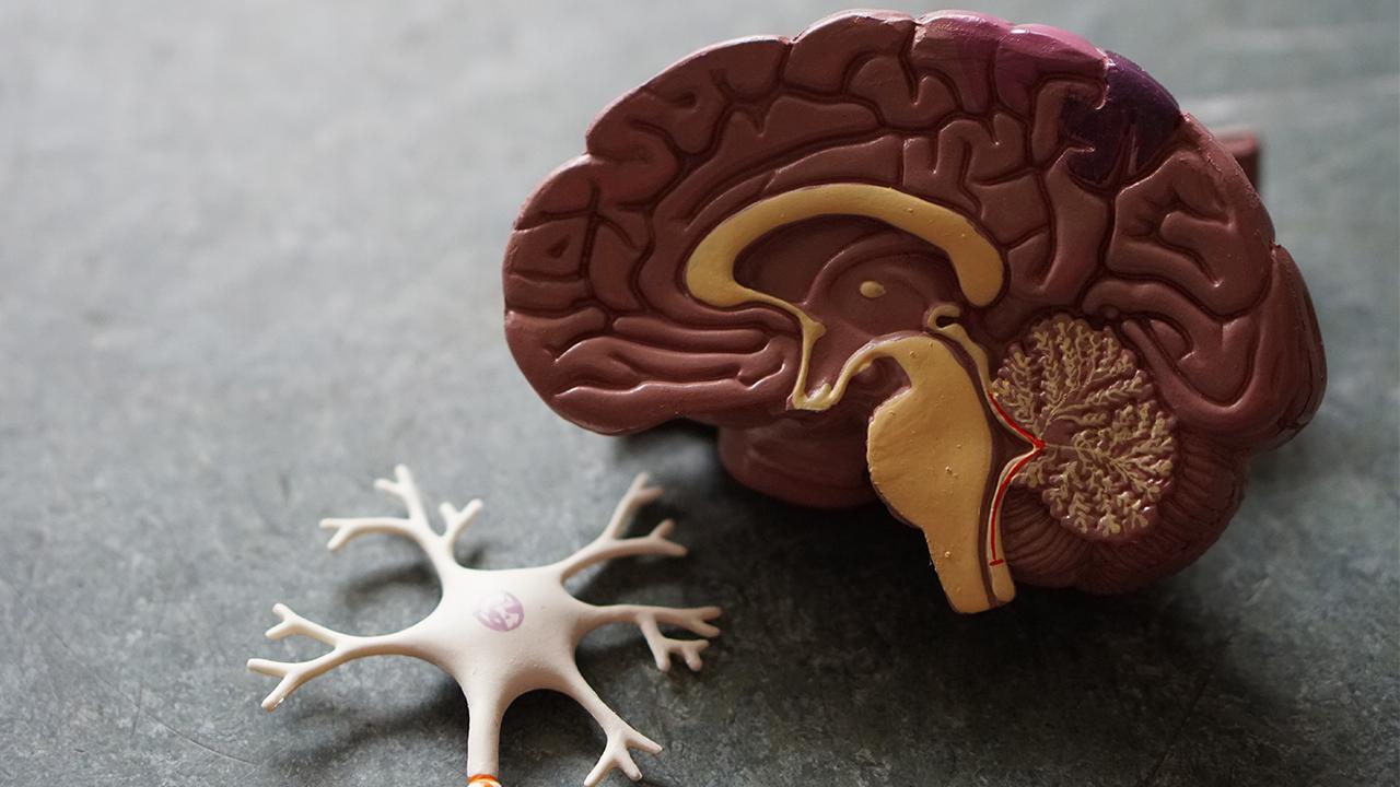 Crean test rápido para detectar el Alzheimer con muestra de sangre