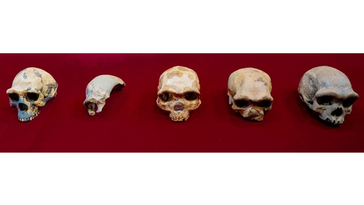 Hallan a un hermano del sapiens: el Homo longi (hombre dragón)