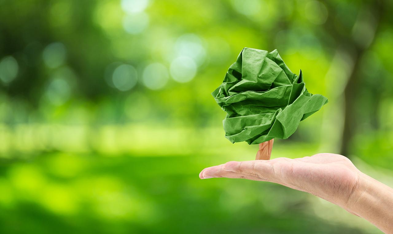 Día Mundial del Medio Ambiente | Empresas que destacan con acciones sustentables