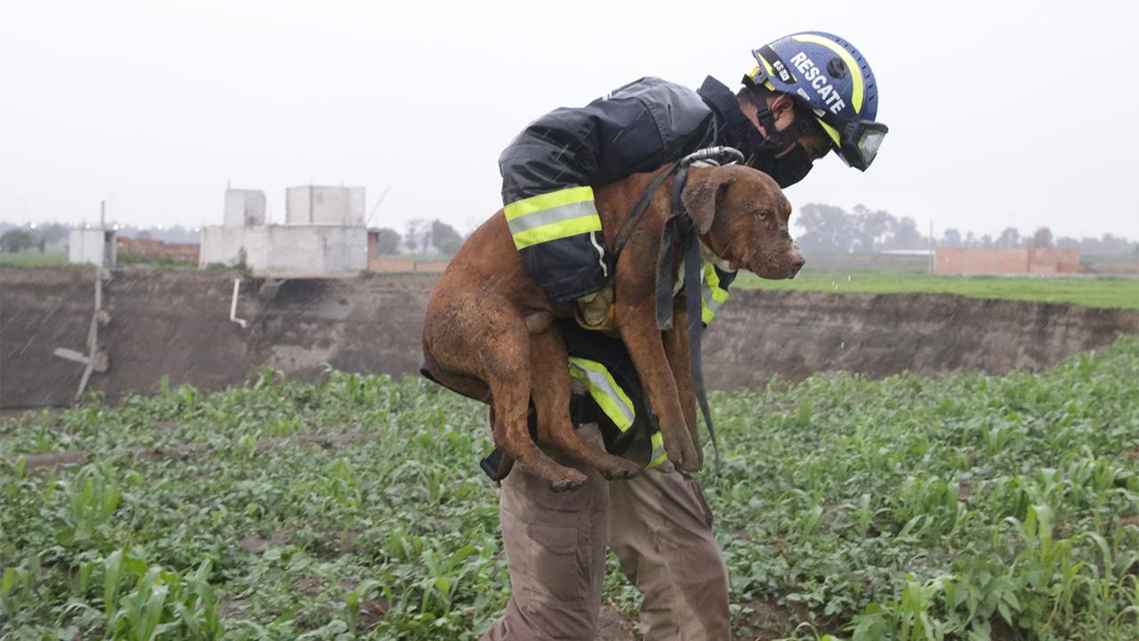Rescatan a los dos perros que habían caído en socavón de Puebla