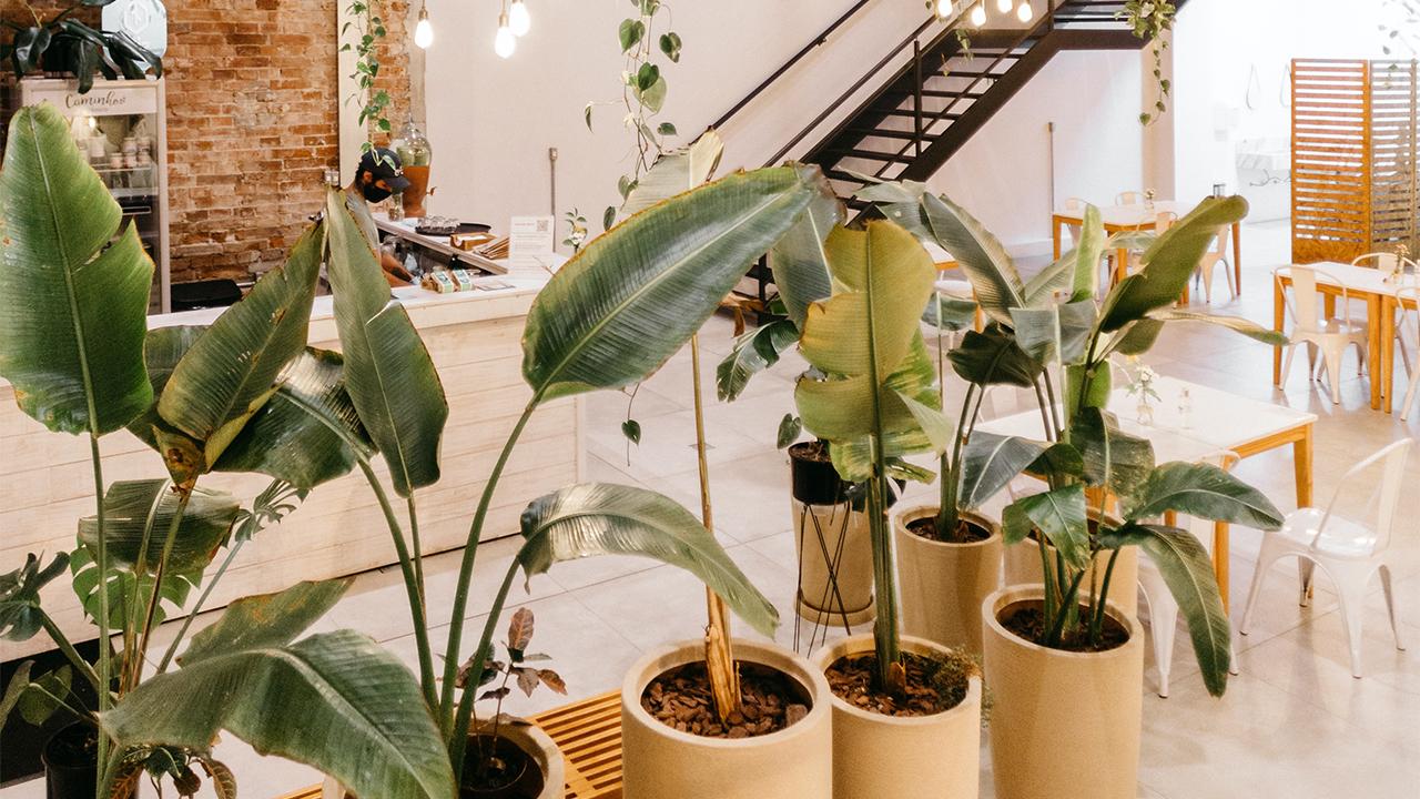 La NASA enumera las plantas de interior que limpian naturalmente tus espacios